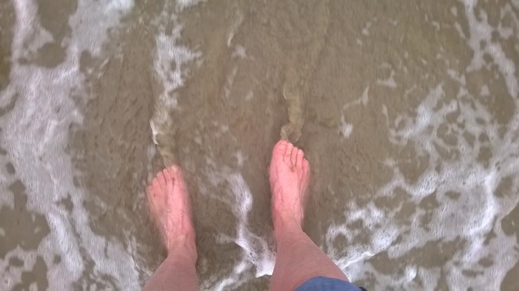 Sparren aan Zee
